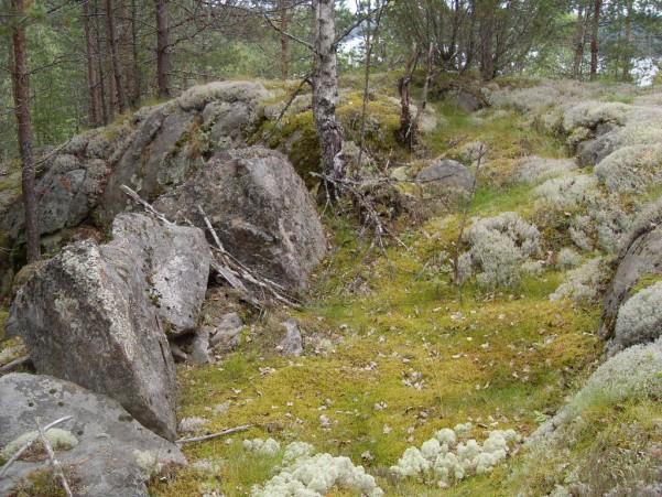 muuri1.jpg