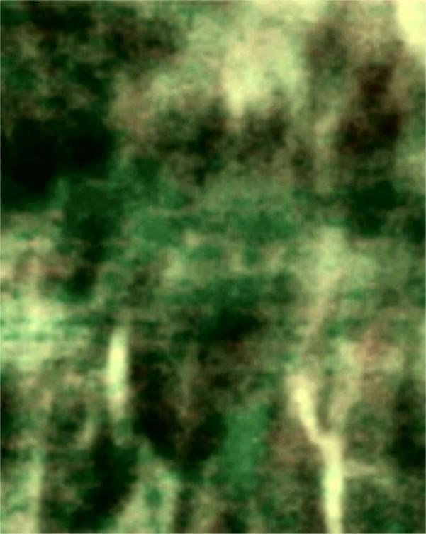toput005.jpg