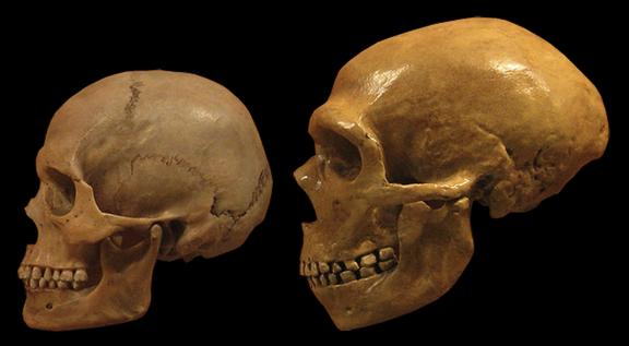 neanderthalkallo.png